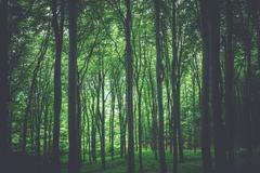 Green Forest Nature Photo Background. Forestry Theme. Stock Photos