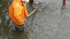 4k, anglers caughting freshwater fish at the factory 7 Stock Footage