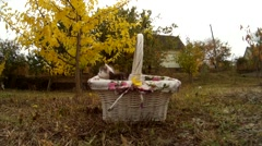 Little kittens cat sitting in wicker basket and walk on meadow in nature Stock Footage