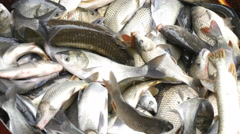 4k, caught freshwater fish at the factory 6 Stock Footage