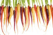 Row of freshly washed colorful carrots Stock Photos