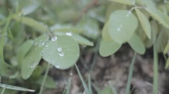 Wet leaves in a windy summer morning in Portugal Stock Footage