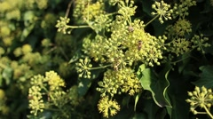 Bees Collecting Pollen Green Leafy Circles Fence Sunny Outdoors Stock Footage