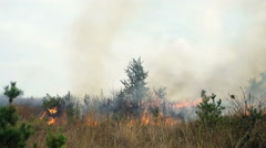 The trees burning in forest fire Stock Footage