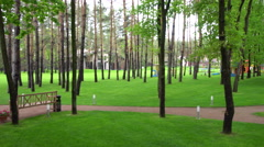 The Lawn Between the Trees With a Swimming Pool Stock Footage