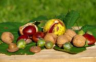 The fruits of nature in autumn Stock Photos