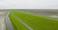 Dike with sheep aerial shot with drone | Nature Friesland Stock Footage