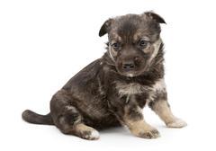 Sad mongrel puppy Stock Photos