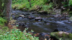 Water stream flowing through forest. Smooth Pan/Tilt. 4K Timelapse Stock Footage