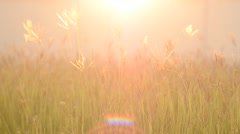 Hay straws waving in the wind by the lake. Image taken during early autumn and p Stock Footage