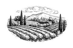 Hand drawn vineyard landscape Stock Illustration