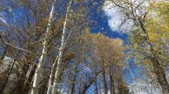 Looking up through fall covered foliage at a blue sky, clouds and sun Stock Footage