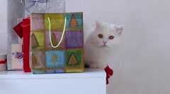 White Cat Sitting on a Chair and Looking at Confetti Among Gifts New Year, Stock Footage