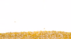 Corn kernels are scattered in the parties. Close up. White. Slow motion Stock Footage