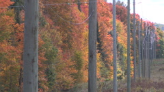 Hydro electric power transmission poles and autumn colors Stock Footage
