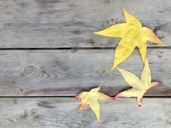 Autumn leaf in grainy wood background with copy space Stock Photos