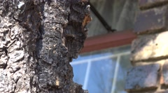 View of an Ant Infestation on an Old Tree Stock Footage