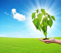 Small tree growing in woman hand. Stock Photos