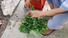 Gardener Binding Star Gooseberry For Sell Stock Footage