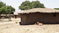 Animals and mud huts in a traditional manyatta of masai mara, kenya Stock Footage