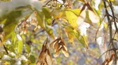 The first snow fell in the autumn forest Stock Footage