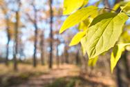 Dry foliage in the forest Stock Photos