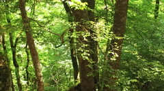 Dense trees in a beautiful deep forest in wilderness with vibrant green foliage Stock Footage
