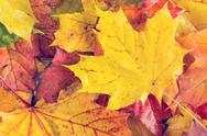 Wet autumnal leaves Stock Photos