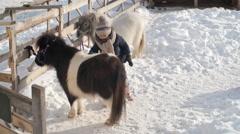 Little Girl Brushing Shetland Pony Stock Footage