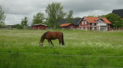 Horses in countryside Stock Footage
