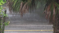 Very heavy rain wind tropical storm julia palm tree Stock Footage