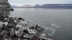 Gypsum deposit at Skansbukta. Svalbard, Spitzbergen Stock Footage