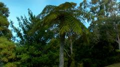 A Fern tree medium shot Stock Footage