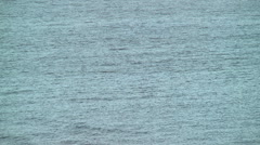 Dolphins swim fins visible above water Stock Footage