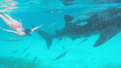 Snorkeling with whale shark Stock Footage