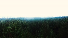 Aireal drone flying over forest trees in Mexico Stock Footage