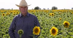 Farm Owner Looking Proud in a TV Presentation for His Best Sunflower Plantation Stock Footage