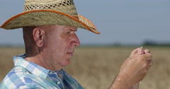 Farm Worker Close View Analyse One Ear of Wheat Checking Cereal Plant Carefully Stock Footage