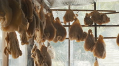 Rump hangs in market. Edible Fat of Sheep. Traditional Caucazian Eastern Food Stock Footage