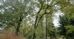 Autumn forest with a beautiful shrub with red leaves-slow motion Stock Footage