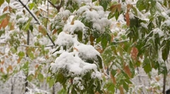 Snow falls from snow-covered branches in the park in slowmotion Stock Footage