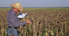 Agronomist Inspect Sunflower Crop Field and Notes Plant Characteristic in Agenda Stock Footage