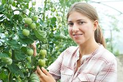 Female Agricultural Worker Checking Tomato Plants In Greenhouse Stock Photos