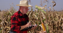 Farmer Observe Closely Corn Plant Growth Modification and Notes Result in Agenda Stock Footage