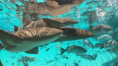 Nurse sharks and exotic fishes swimming in tropical ocean water Stock Footage