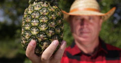 Countryman Presenting Close Image of Pineapple Fruit Vegan Natural Healthy Diet Stock Footage