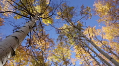 Tilt down from sunny blue sky and a yellow forest canopy to a sun flare Stock Footage