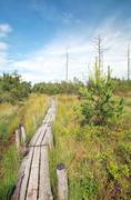 Wooden path on swamp in summer Stock Photos