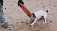 Woman playing with dog on the sea shore Stock Footage