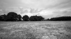 Run in a meadow with wild grass then take off. Full HD black and white. Stock Footage